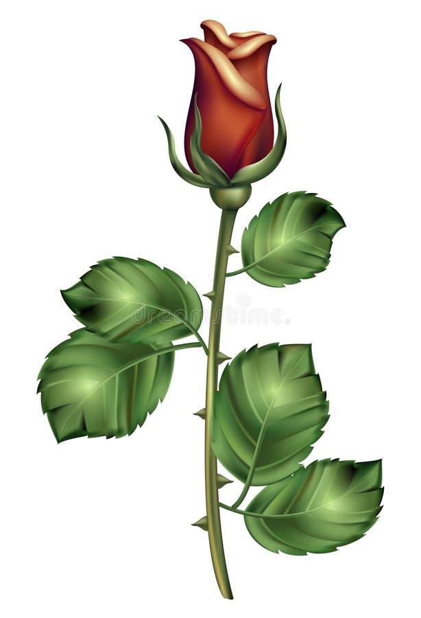 Rosa bonita vermelha Ilustração realística desenvolvida cor-de-rosa escura de Roos com pétalas verdes ilustração do vetor