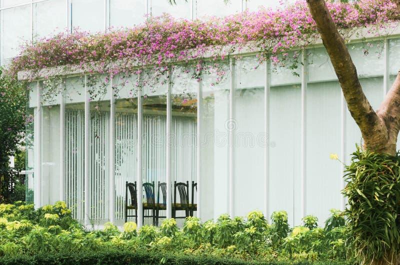 Rosa Bouganvillablumen mit gr?nen Bl?ttern auf dem Dach des modernen Hauses stockfotos