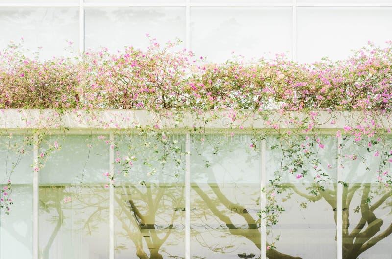 Rosa Bouganvillablumen mit gr?nen Bl?ttern auf dem Dach des modernen Hauses lizenzfreie stockfotos