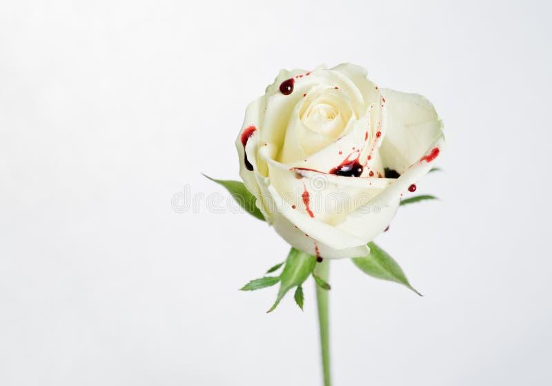 Rosa branca com gotas do sangue foto de stock