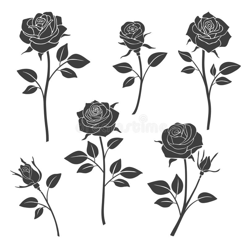 Rosa brota silhuetas do vetor Elementos do projeto das flores ilustração stock