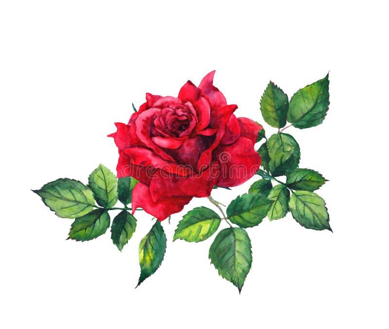 Rosa com folhas - única flor do vermelho watercolor ilustração royalty free