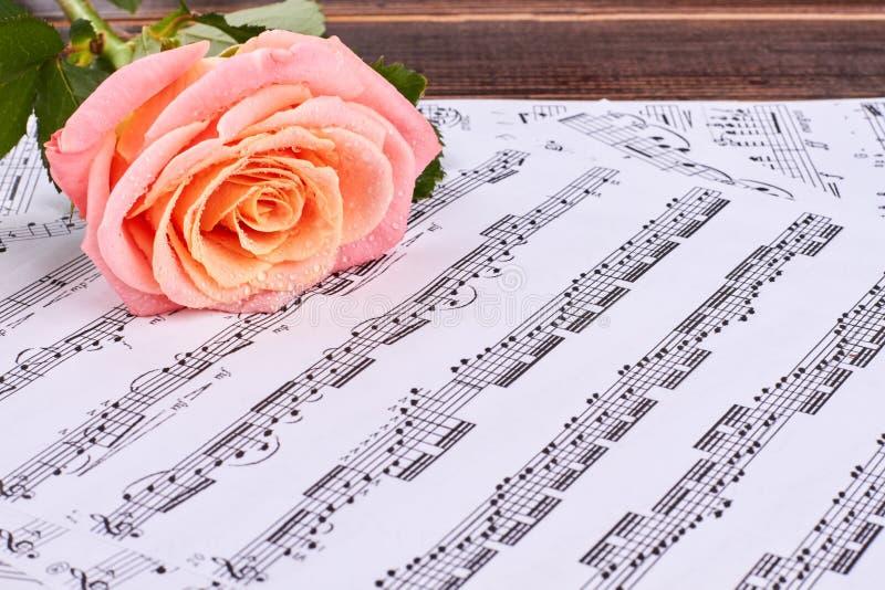 A rosa cor-de-rosa e as notas musicais fecham-se acima imagem de stock royalty free