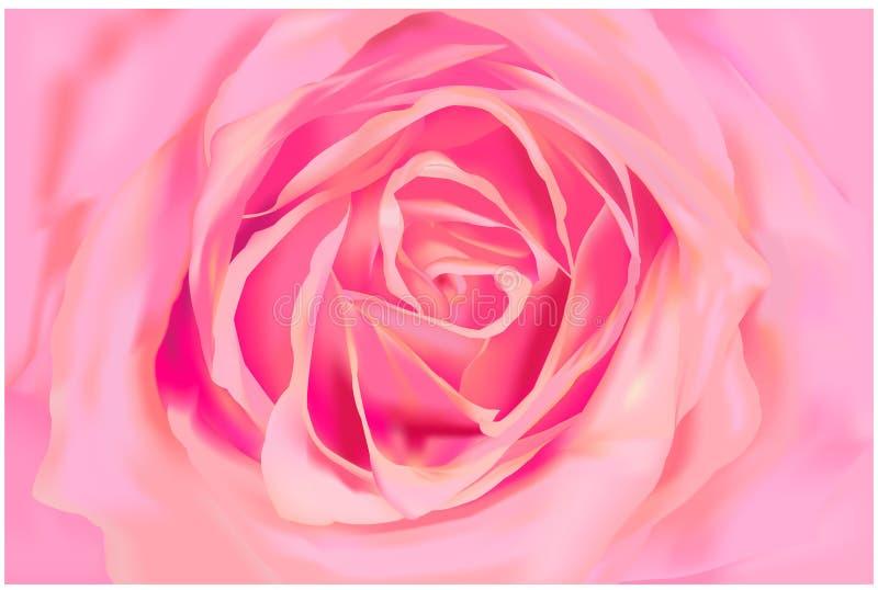 Rosa cor-de-rosa ilustração do vetor