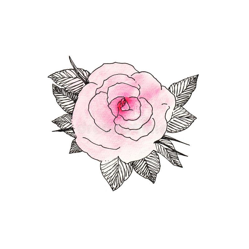 Rosa cor-de-rosa 1 imagem de stock royalty free