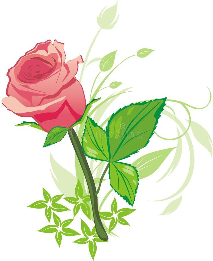 Rosa da cor-de-rosa e galhos decorativos ilustração stock