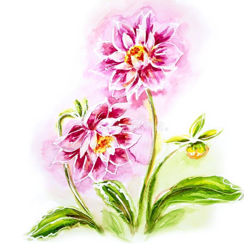 Rosa dahlia, vattenfärgmålning. stock illustrationer