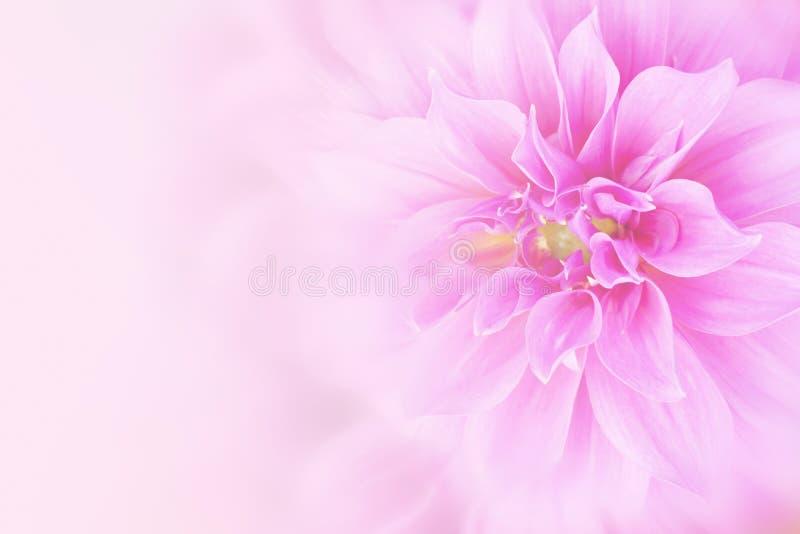 Rosa Dahlienblumenhintergrund im weichen Ton mit Kopienraum lizenzfreie stockbilder