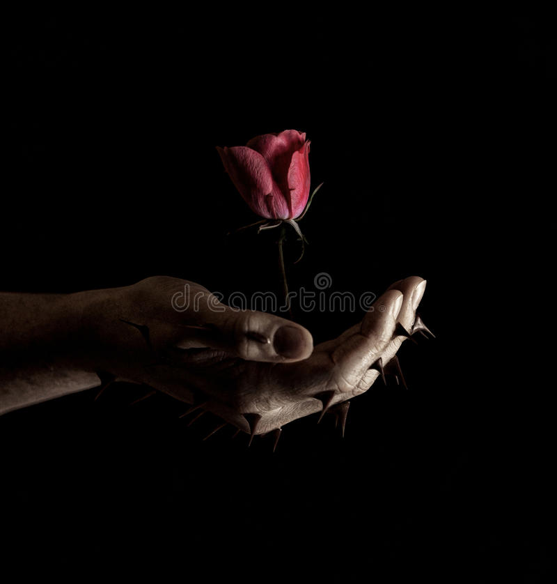 Rosa dalle spine fotografia stock
