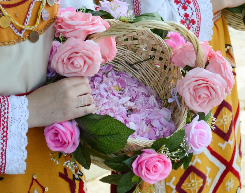 Rosa Damascena from the Rose Valley. Basket full of oil rose. Part of the beautiful `Rose Festival`. The `Rose Festival` is held every year at the end of May stock image