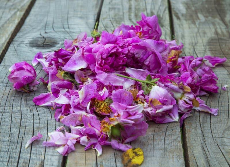 Rosa damascenarozen voor jam en schoonheidsbehandelingen royalty-vrije stock afbeelding