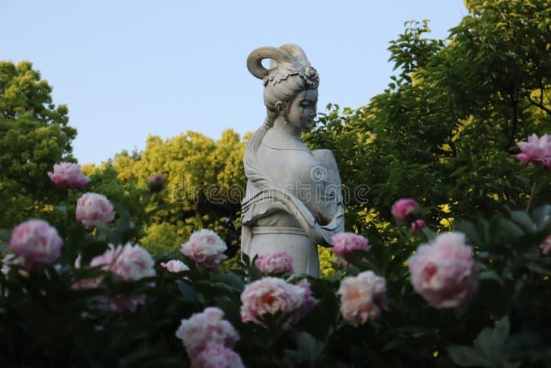 Rosa de flower power e rosas roxas imagens de stock royalty free