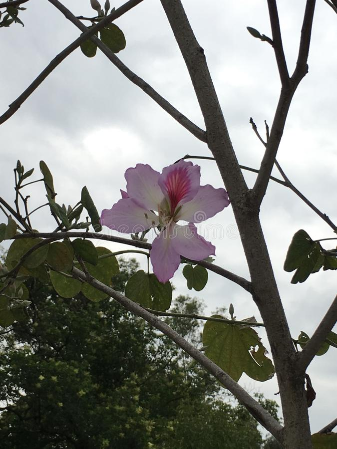 Rosa de la flor foto de archivo