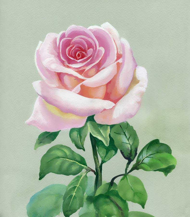 Rosa de Rosa. Pintura da aguarela ilustração royalty free