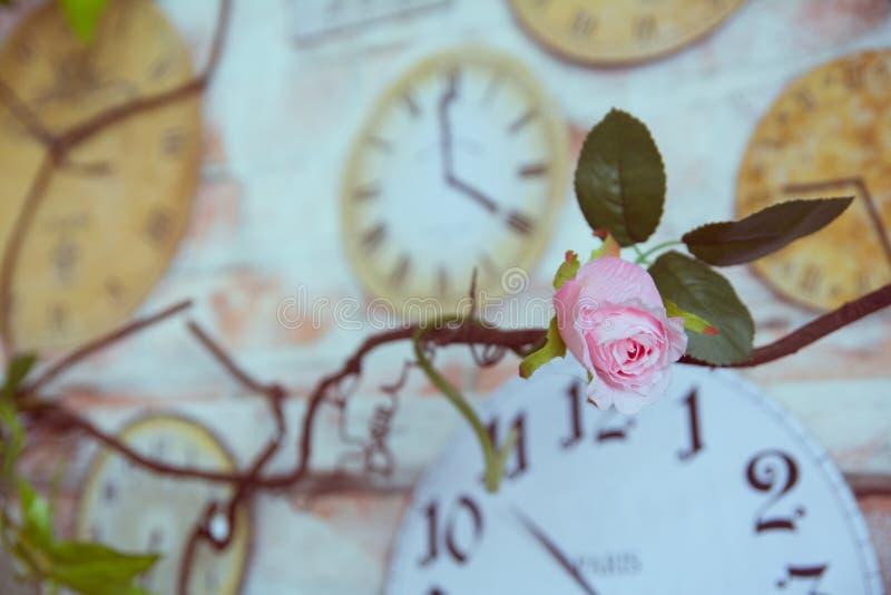 Rosa decorativa contra el reloj de pared del fondo dentro del cuarto fotografía de archivo libre de regalías