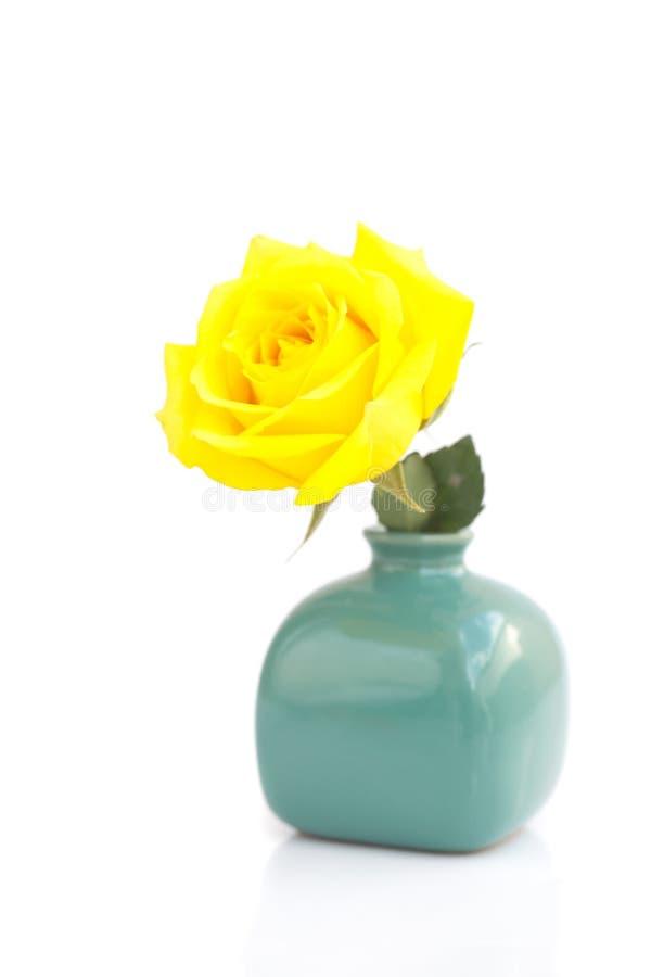 Rosa del amarillo aislada en blanco foto de archivo