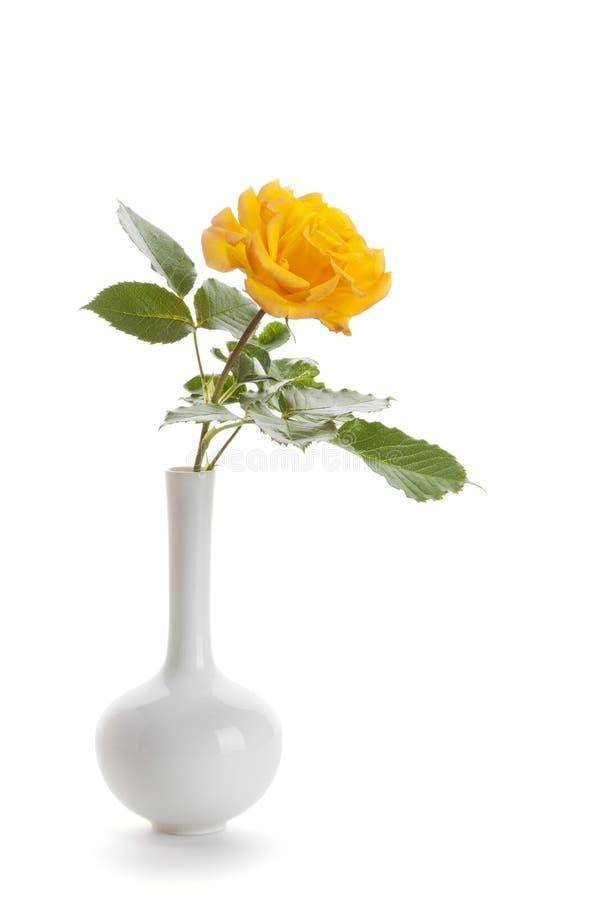 Rosa del amarillo en el florero blanco aislado imagen de archivo libre de regalías