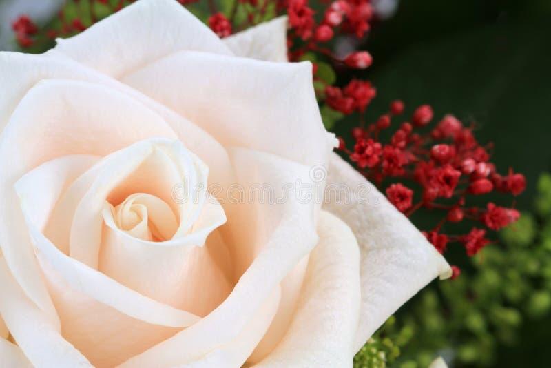 Rosa del blanco con el tiro macro fotos de archivo libres de regalías