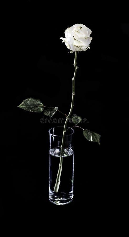 Rosa del blanco en un florero de cristal fotos de archivo
