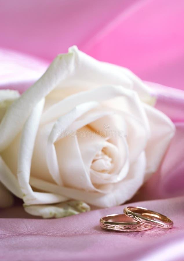 Rosa del blanco y anillos de bodas imágenes de archivo libres de regalías