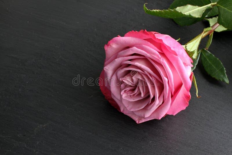 Rosa del rosa con las hojas en fondo de la pizarra foto de archivo libre de regalías