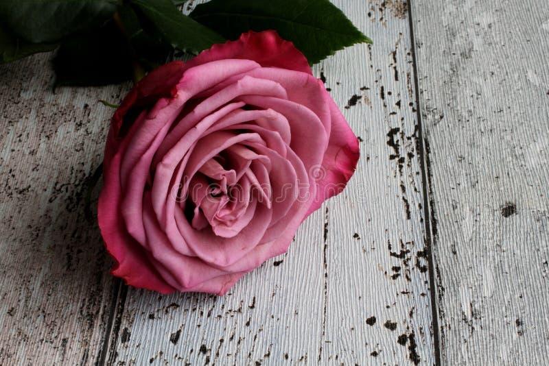 Rosa del rosa con las hojas en fondo de madera foto de archivo libre de regalías
