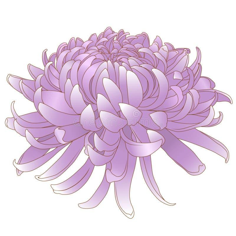 Rosa del crisantemo royalty illustrazione gratis