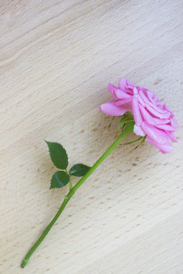 Rosa del rosa en fondo de madera foto de archivo