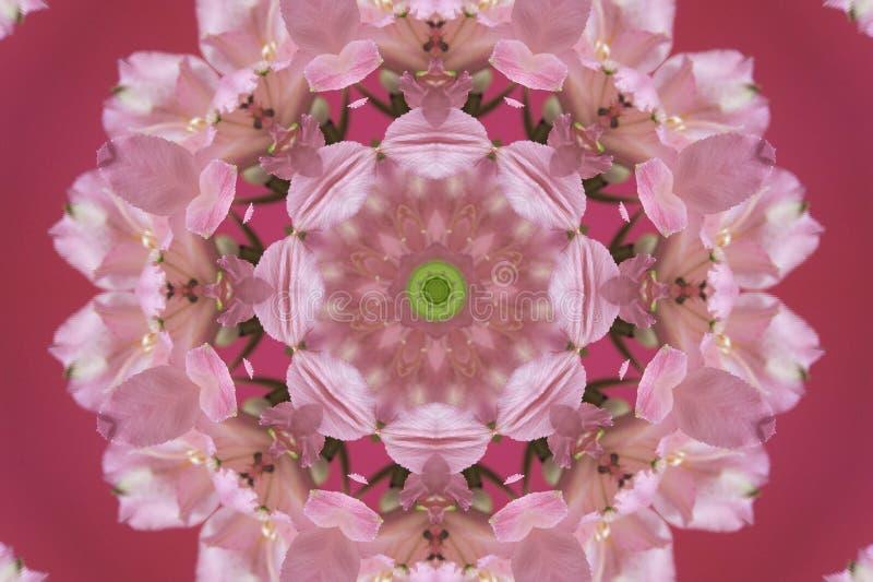 rosa del extracto con el ornamento verde (mandala, caleidoscopio) ilustración del vector