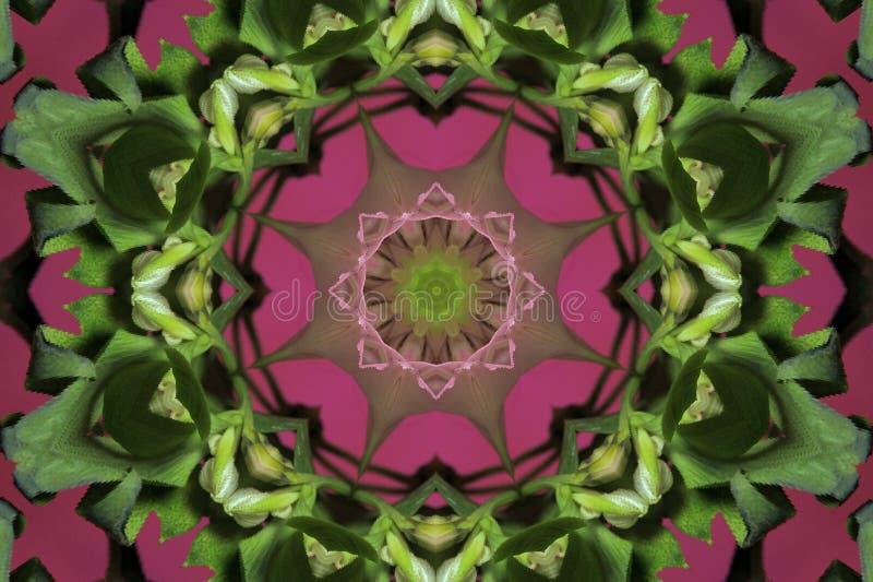 rosa del extracto con el ornamento verde (mandala, caleidoscopio) libre illustration