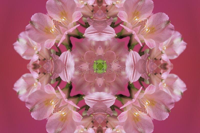 rosa del extracto con el ornamento verde (mandala, caleidoscopio) stock de ilustración
