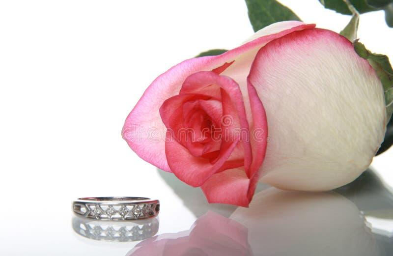 Rosa del Gentile ed anello di cerimonia nuziale fotografia stock