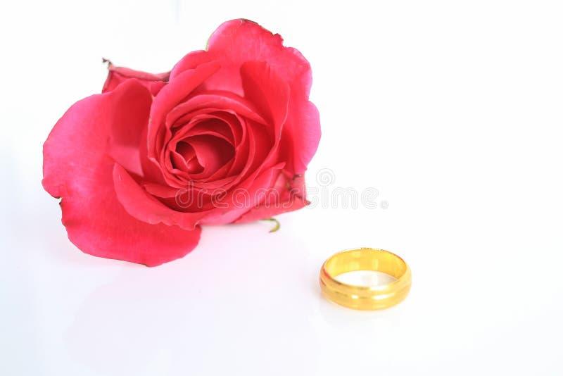 Rosa del rojo con el anillo en el fondo blanco foto de archivo libre de regalías
