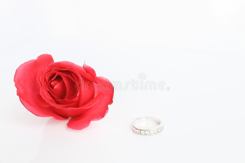 Rosa del rojo con el anillo en el fondo blanco imagen de archivo