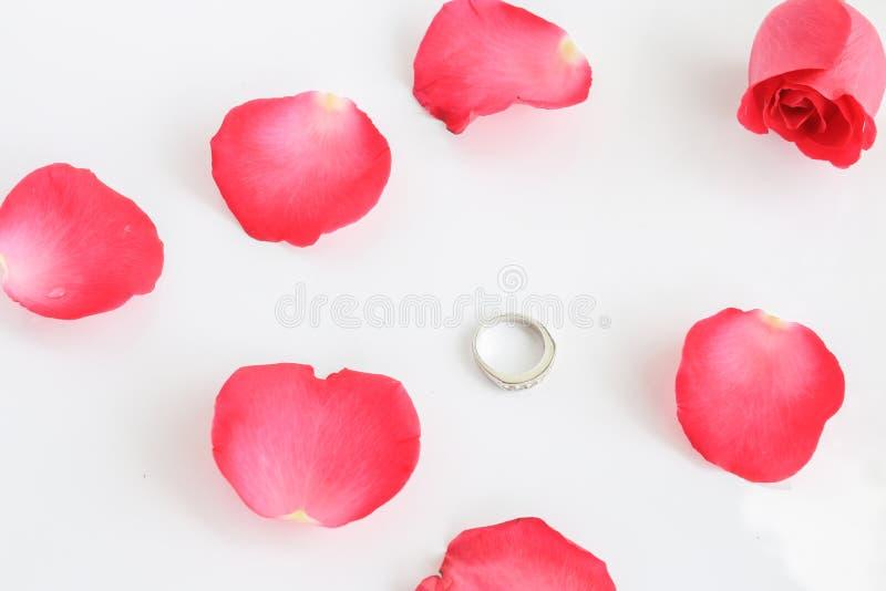 Rosa del rojo con el anillo en el fondo blanco fotografía de archivo libre de regalías