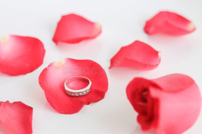 Rosa del rojo con el anillo en el fondo blanco fotos de archivo