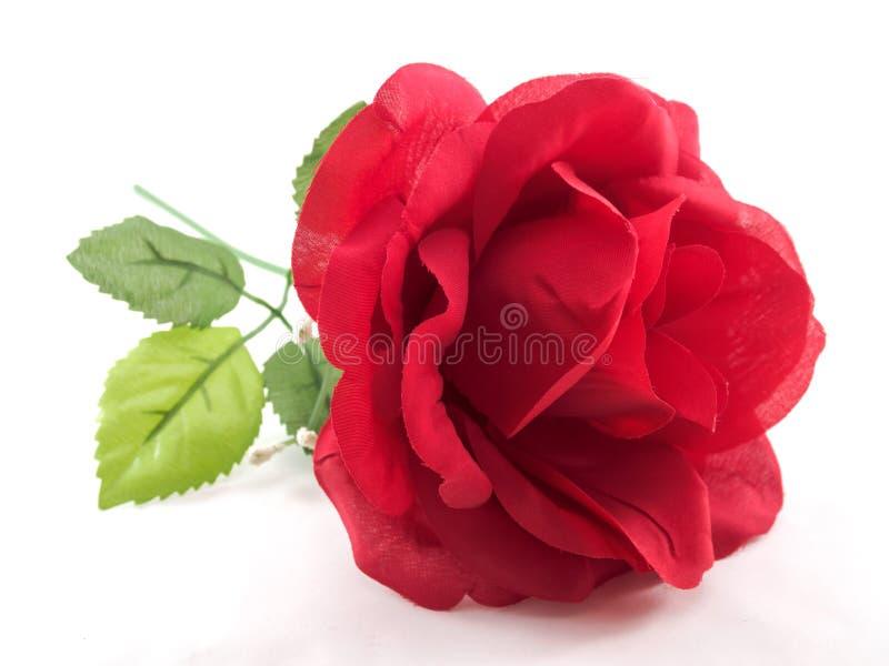 Rosa del rojo de aislado imagenes de archivo