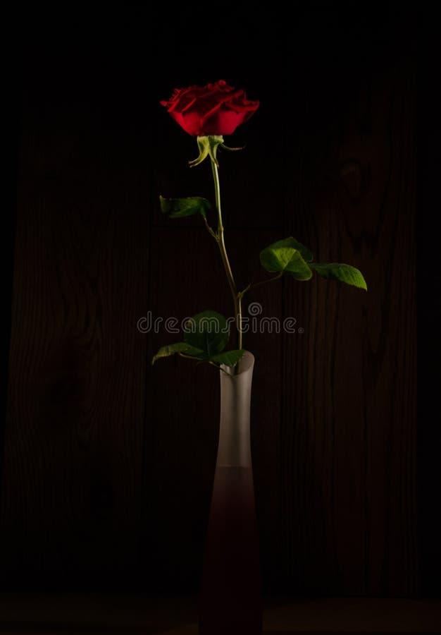 Rosa del rojo en un florero en la oscuridad fotografía de archivo libre de regalías