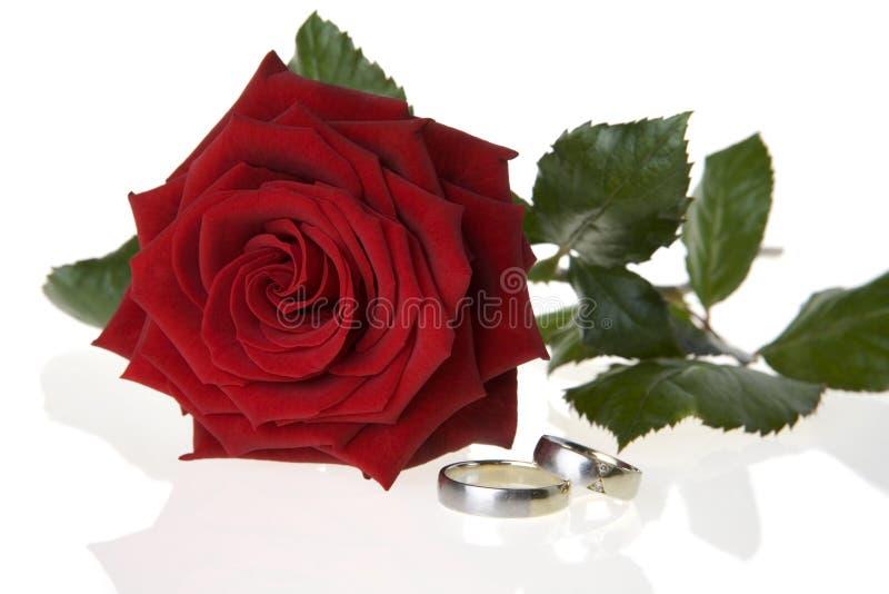 Rosa del rojo y anillos de bodas fotos de archivo