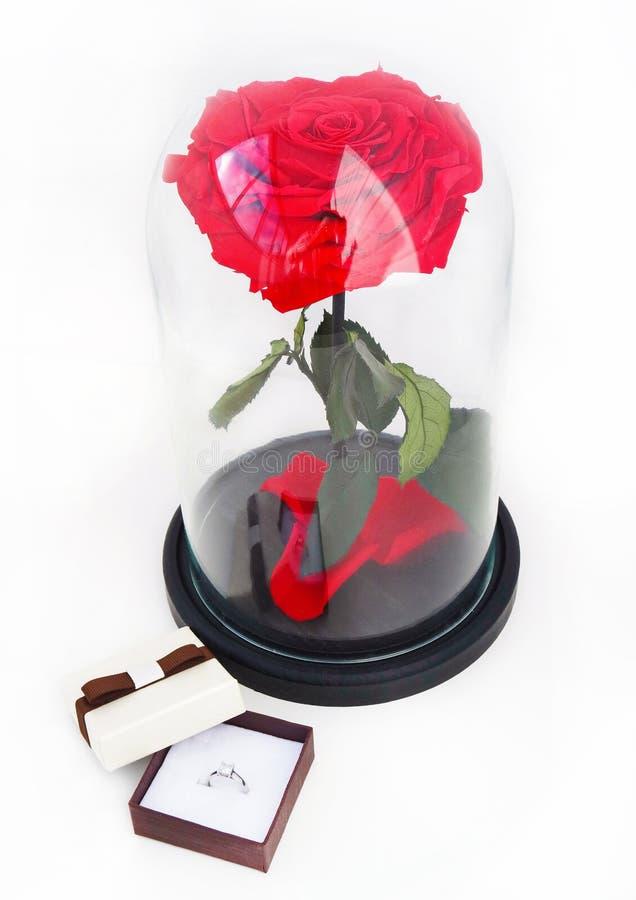 Rosa del rojo y un anillo en una caja Rose en un frasco fotos de archivo
