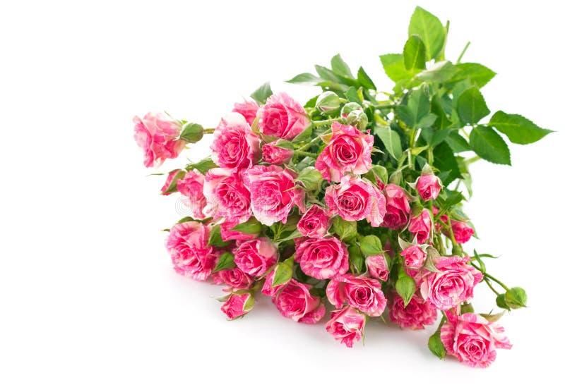 Rosa del rosa del ramo con la hoja verde imágenes de archivo libres de regalías
