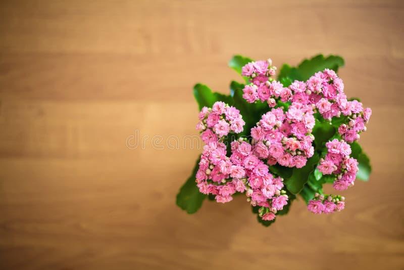 Rosa del rosa en fondo de madera fotos de archivo libres de regalías