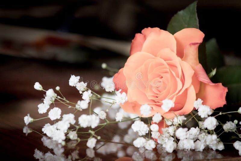 Rosa delicada em um fundo escuro borrão fotografia de stock royalty free