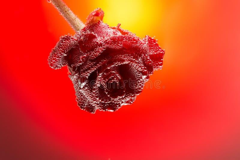 Rosa della carta di regalo coperta di bolle isolate su una pendenza b rossa fotografie stock