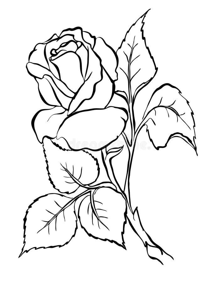 Rosa. Desenho da carta branca. ilustração royalty free