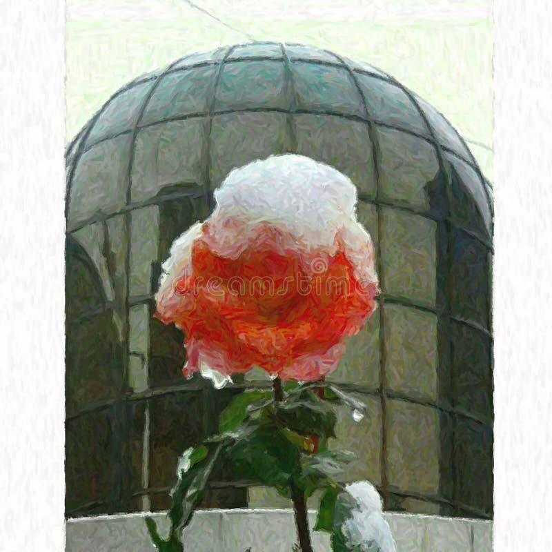 Rosa di rosa congelato su fiocchi di neve immagine stock libera da diritti