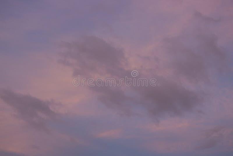 rosa di penombra immagine stock