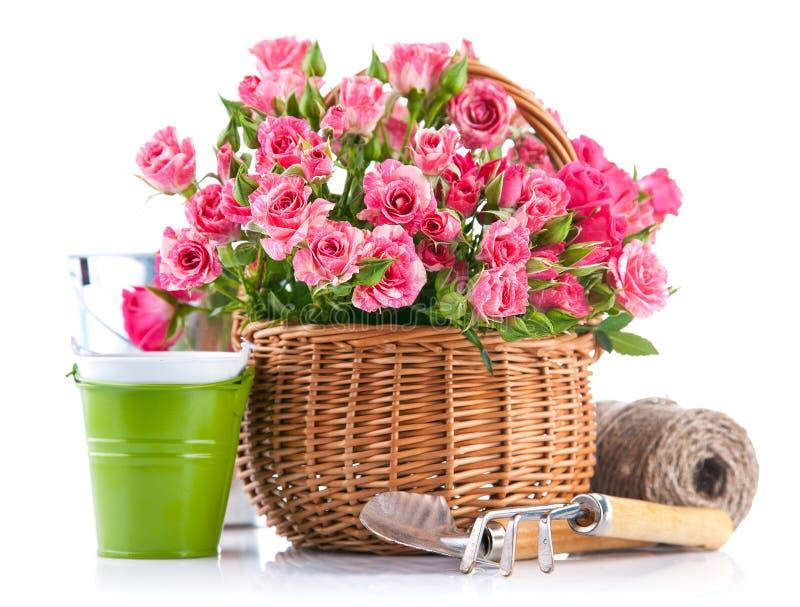 Rosa di rosa in canestro di vimini con lo strumento di giardino immagine stock libera da diritti