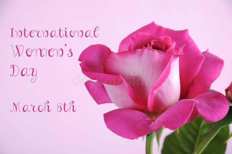 Rosa di rosa di Giornata internazionale della donna fotografia stock libera da diritti