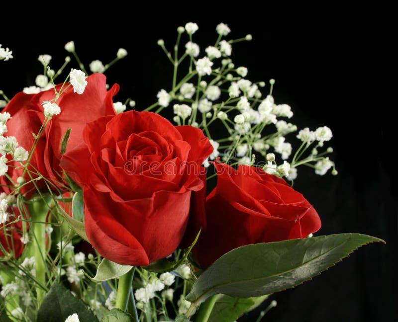 Rosa di stupore immagine stock